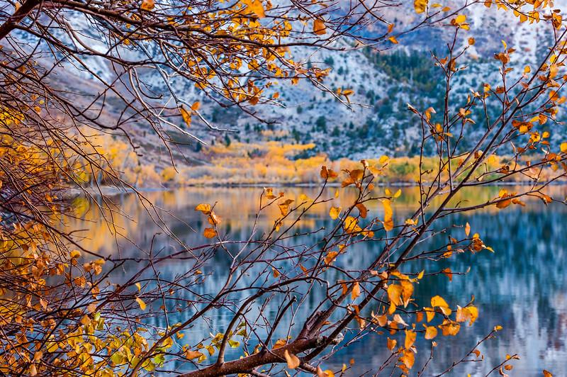 Convict Lake Fall Color