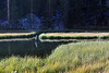 Weir Pond Bishop Creek
