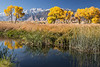 owens valley-3681
