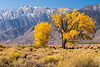 owens valley-3687