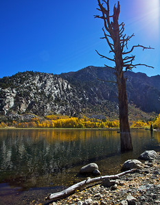 Eastern Sierra Fall Color 2011