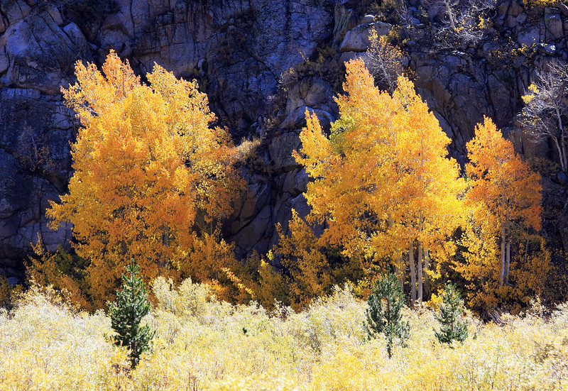 Aspens and Canyon Wall. Canon EOS 40D, Canon 70-200mm f/4 L IS lens.