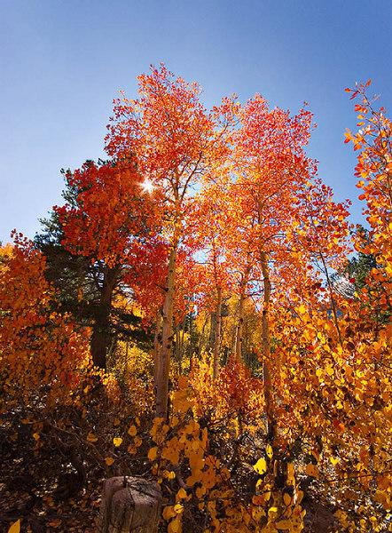 """""""Aspens at North Lake""""<br /> 5 October 2006"""