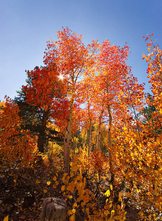 """Aspens at North Lake""<br /> 5 October 2006"