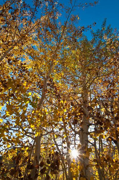 Looking up at Fall Colors 0632