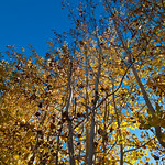 More looking up at Fall colors 0619