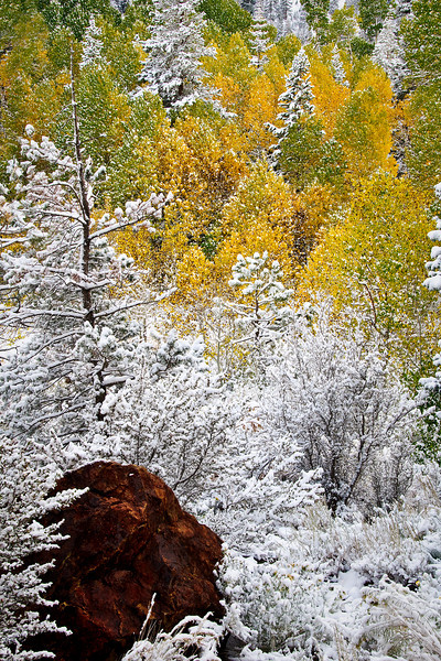 Rock Snow and Fall Colors with Aspens in Yosemite
