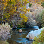Fall Colors along the Creek.  Near Bishop in the Eastern Sierras.  0823