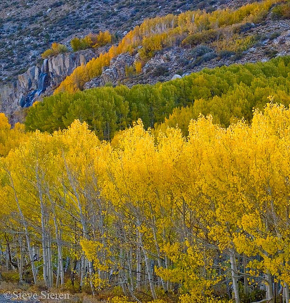 Bishop Canyon Fall Color Bishop, California