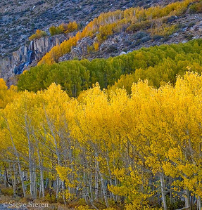 Bishop Canyon Fall Color Bishop, California