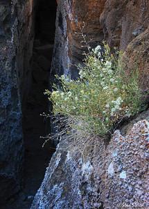 Cobweb Labrynth Mono Basin