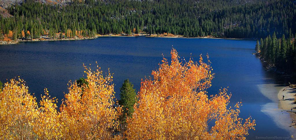 Fall Color panorama at Rock Creek, Eastern Sierra