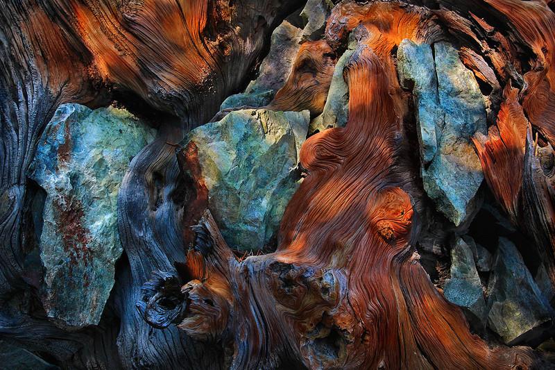 Stones in the Wood - Eastern Sierra Back Country