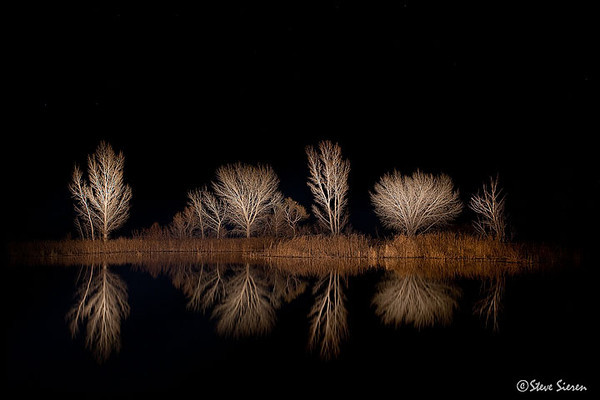 Owens Valley trees during a winter night