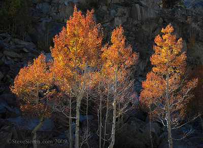 Firery Autumn Bishop Canyon 2009