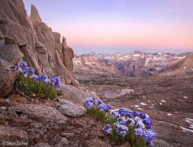Nothing grows higher than a Sky Pilot in the Sierra Nevada. Growing right of the scree slopes of Mt. Agassiz staring at the Dusy Basin and off into LeConte Canyon in the distance. The rocks just bounce off these little dense bush like flowers only centimeters tall. Guess you can say I appreciate the smaller things in life.   Sky Pilot is also a common name for a person leading other's to heaven. Not trying to say I'm taking you there but it's as close as you can get on your own 2 legs in the mountains California while still having flowers at your feet.