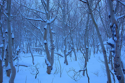 Bishop Creek Winter Snow trees