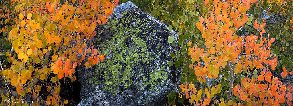 Fall 2009
