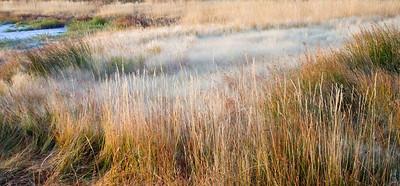 Grass along the Mono Lake #2
