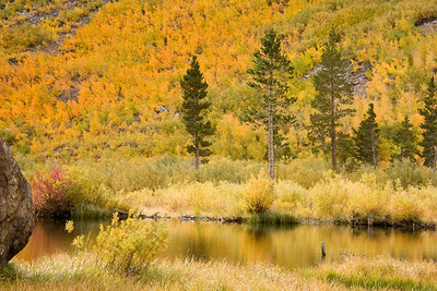 Lundy Lake, Beaver Pond