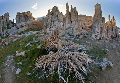 Tufa and Dried Branches