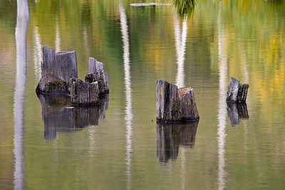 Stump and Reflections