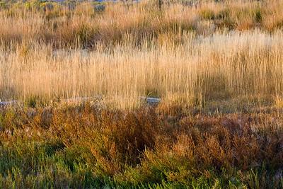 Grass along the Mono Lake