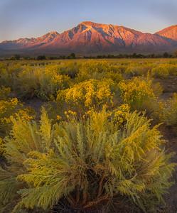 Mt. Tom at Sunrise