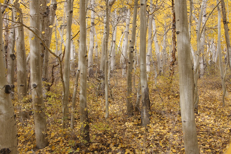 Aspen Color in Layers