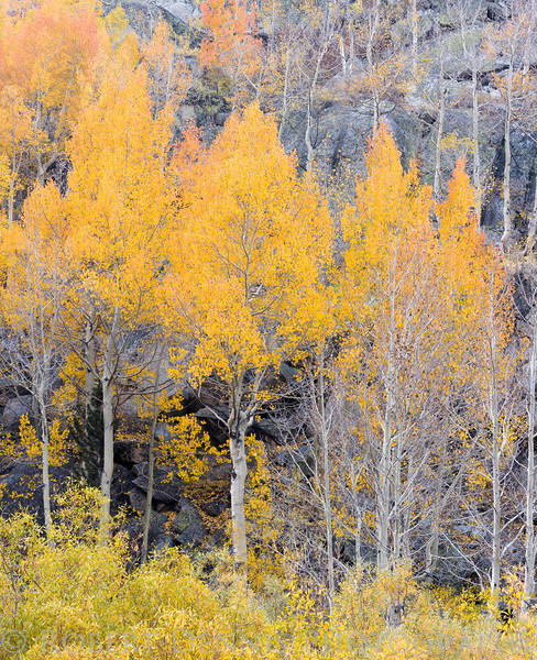 Eastern Sierra fall color 2016
