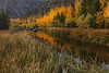 Color Along the Creek