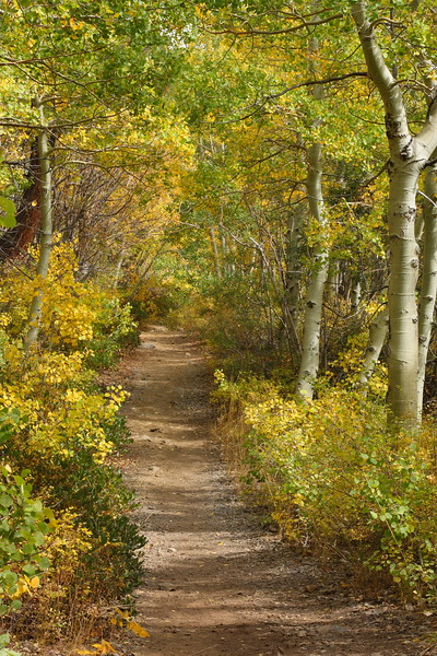 A Path Through the Aspens