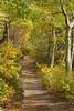 A Path Through the Aspens