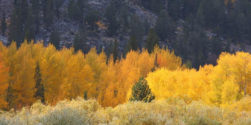 Fall Color Palette, North Lake