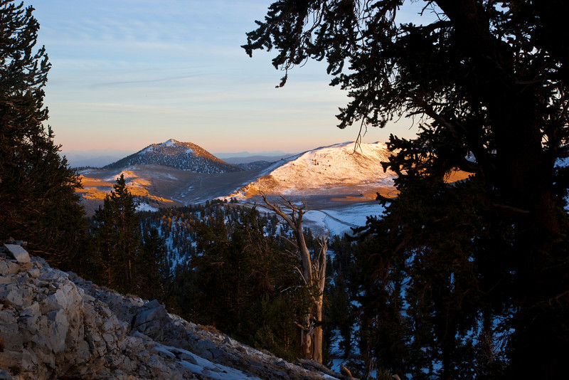 Sunset from bristlecone pine forest