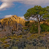 A lone tree in the Alabama Hills at sunrise with Lone Pine Mt. in the background