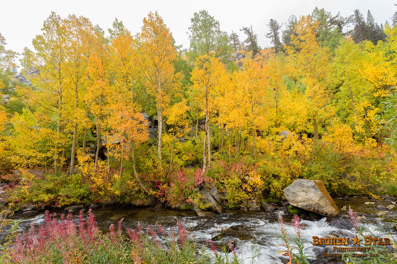 Fall Colors Along the South Fork Bishop Creek