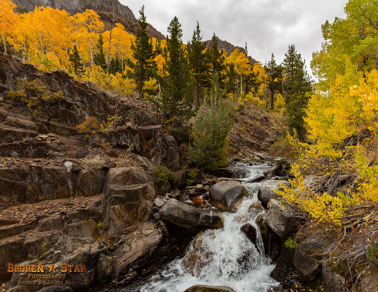 Fall Colors and Creek Cascade