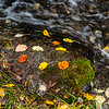 Natural Spring and Fall Colors