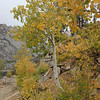 Fall comes to Bishop Pass.