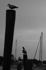 Ocracoke Island, May 2005