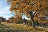 Moscow, Idaho cemetery