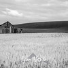 57  G Palouse Field and Barn Sharp BW