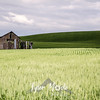56  G Palouse Field and Barn Sharp