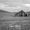 40  G Palouse Field and Barn Sharp BW