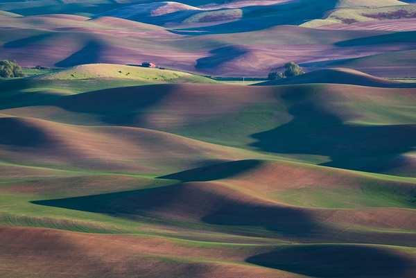 Shadows of the Palouse