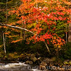 A photo-watercolor rendition of a small stream in Adirondack State Park.