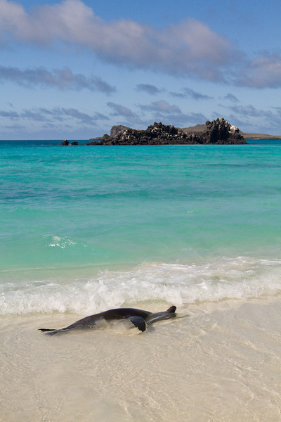 Sea Lion relaxing - Espanola Island, Galapagos