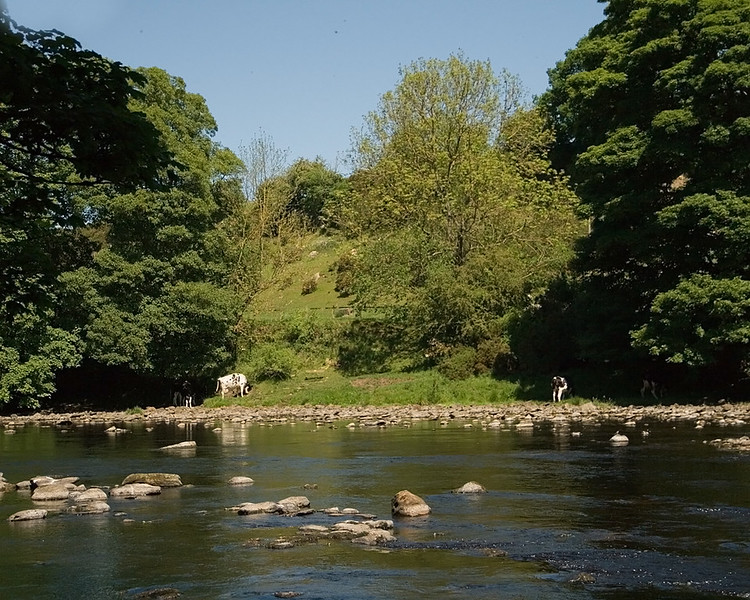 The woods and River Wear at Eggleston