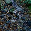 Minerals, water, flora